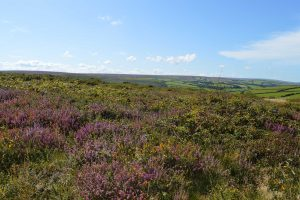 East-Lyn-House-Exmoor-heather