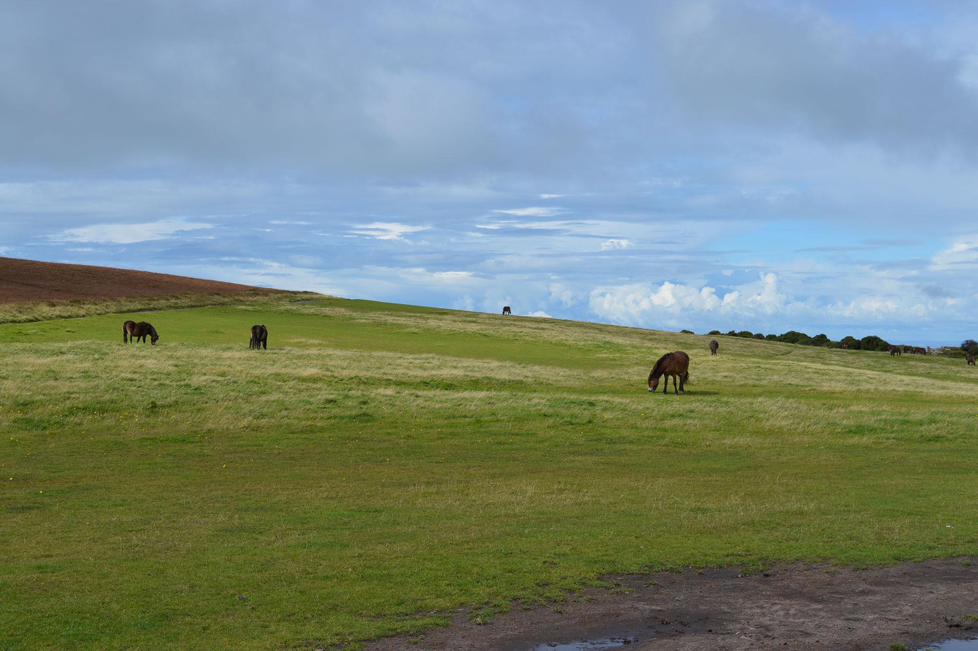 East Lyn House wild ponies on Exmoor